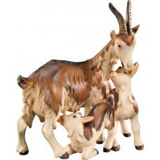 Goat three-group