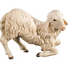 Sheep kneeling