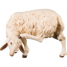 Sheep scratching 12 cm Serie Colored maple