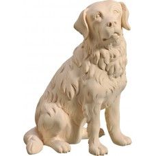 Saint Bernard 40 cm Serie Natural maple