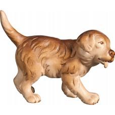 Saint Bernard puppy 40 cm Serie Stained+tones maple