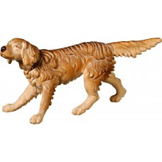 English Setter 27 cm Serie [18x9cm] Stained+tones maple